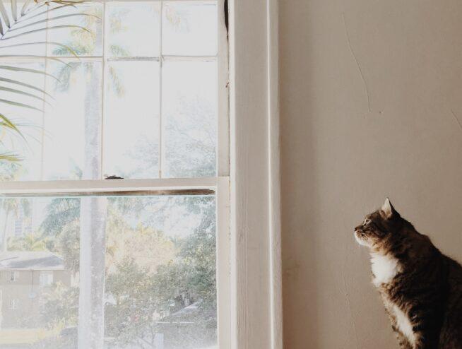 omaha window company